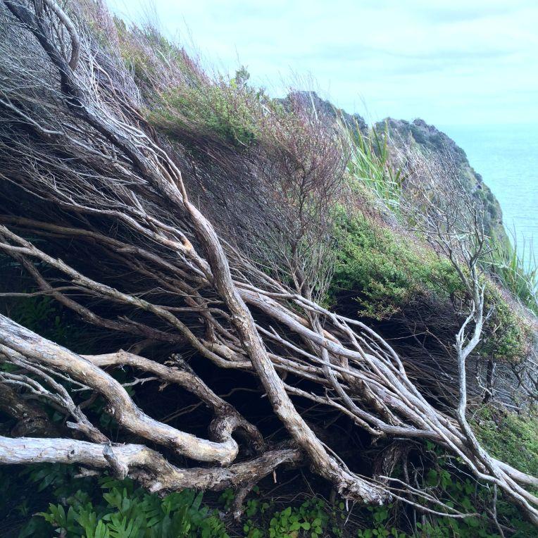 piha-trees-wind